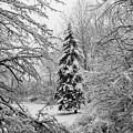 Christmas Snow by Michael L Kimble