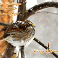 Christmas Sparrow - Christmas Card by Lois Bryan