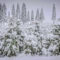 Christmas Tree Farm by Steph Gabler