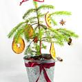 Christmas Tree by Helen Northcott