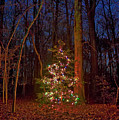 Christmas Tree In Forest by John Greim