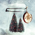 Christmas Tree Snowglobe by Amanda Elwell