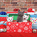 Christmas With Kittens by Sheila Fitzgerald