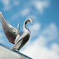 Chrome Swan by Helen Northcott