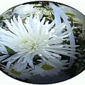 Chrysanthemum Egg by Charles Robinson
