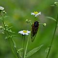 Cicada by David Kelso