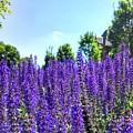 Cincy Flower Field by Brad Nellis