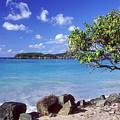 Cinnamon Bay 7 by Pauline Walsh Jacobson