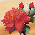 Cinnamon Roses by Jan Baughman