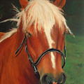 Cinnamon The Horse by Portraits By NC