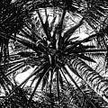Circle Of Life by Brian Gomes