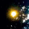 Circle Of Sunglow Through Pine by Debra Lynch