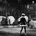 Circus: Polar Bears by Granger