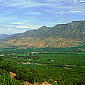 Citrus Trees, Ojai Valley, California by Panoramic Images