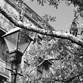 City Bird Black And White by Robin Lewis