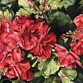 City Flowers Red Geranium by Helen Shideler