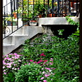 City Garden by Vickie Washington