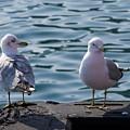 City Gulls by Andrei Shliakhau