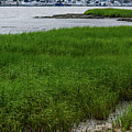 City Marina Marsh View by Dale Powell