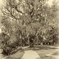 City Park New Orleans - Sepia by Steve Harrington