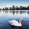 City Swan by Marc Stuelken