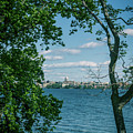 City Through The Trees by Rockland Filmworks