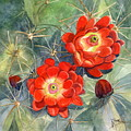 Claret Cup Cactus by Marilyn Smith