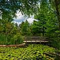 Clark Gardens Botanical Park by Mountain Dreams