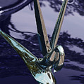 Classic Car Packard Silver Goose by Garth Glazier