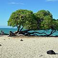 Classic Hawaii Beach Landscape by Bruce Gourley