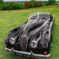 Classic Jag by Adrian Evans