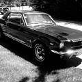 classic Mustang by Annie Babineau