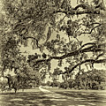 Classic Southern Beauty - Evergreen Plantation -sepia by Steve Harrington