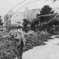 Claude Monet In His Garden by French School