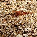 Cleaner Shrimp On Shell Covered Bottom by James Forte