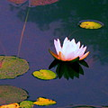 Clear Reflections Lotus by Sybil Staples