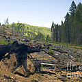 Clearcut Logging Site by Inga Spence