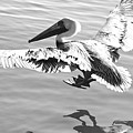Cleared For Landing by Bonnes Eyes Fine Art Photography