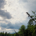 Clearing Sky, Lake Umbagog, Errol, Nh  -40265 by John Bald