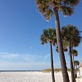 Clearwater Palms by Barbara Von Pagel