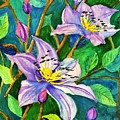 Clematis For Elsie by Terri Huffman