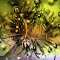 Clematis Magic by Jolanta Anna Karolska