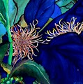 Clematis Regal In Purple And Blue Sold by Lil Taylor