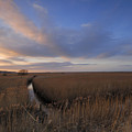 Cley Marshes  by Liz Pinchen