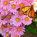 Cliff House Butterflies by Heather Weikel