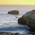 Cliff Jumping To Surf by Janine Moore
