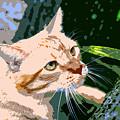 Climbing Cat by David Lee Thompson