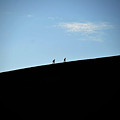 Climbing Up by Harry Coburn