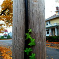 Climbing Vine by Christopher Brown