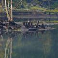 Clinch River Beauty by Douglas Stucky
